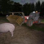 Schweine Ausmisten auf der Hof Bergmann-Reloaded!!