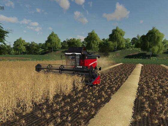 Weizen Ernte am frühen Morgen