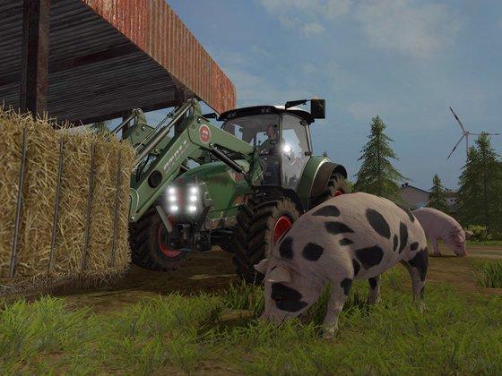 Stroh für die Schweine
