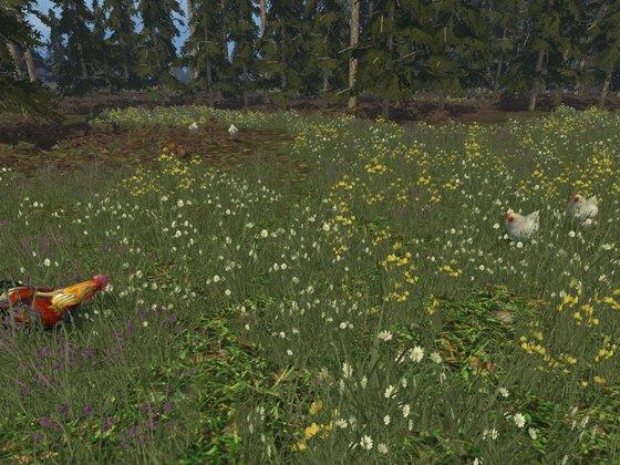Tiere in der Schweinebucht