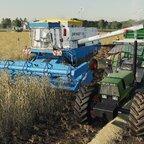 Der Weizen kommt auf Feld 15 runter ... 🌿