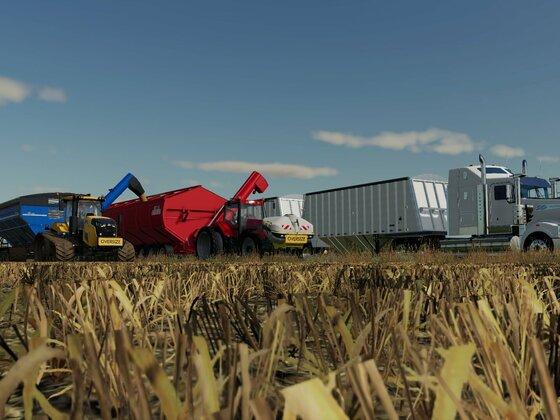 Weizenernte auf der Golden Farms